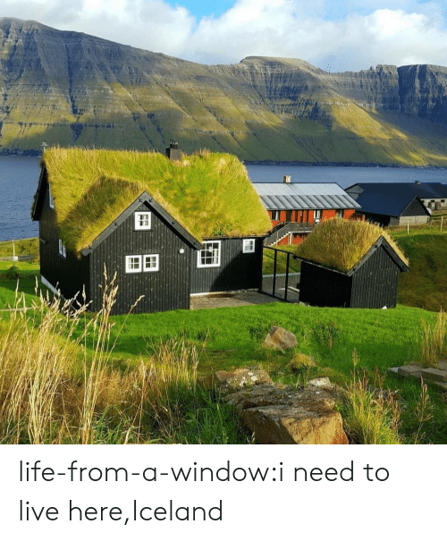 Life, Tumblr, and Blog: FF life-from-a-window:i need to live here,Iceland