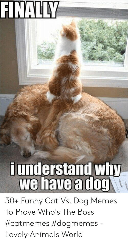 funny cat: FINALLY  d understand why  we have a dog 30+ Funny Cat Vs. Dog Memes To Prove Who's The Boss #catmemes #dogmemes - Lovely Animals World