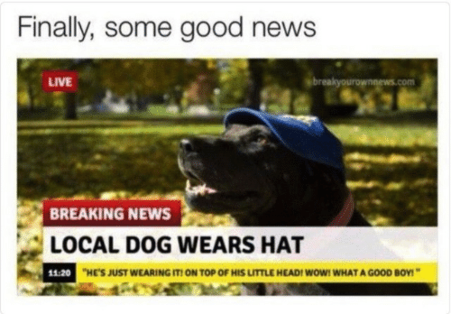 News Live: Finally, some good news  LIVE  breakyourownnews.com  BREAKING NEWS  LOCAL DOG WEARS HAT  11:20  HE'S JUST WEARING IT! ON TOP OF HIS LITTLE HEAD! WoW! WHAT A GOOD BOY!""