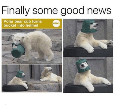 Bucket: Finally some good news  Polar bear cub turns  bucket into helmet  mnn .