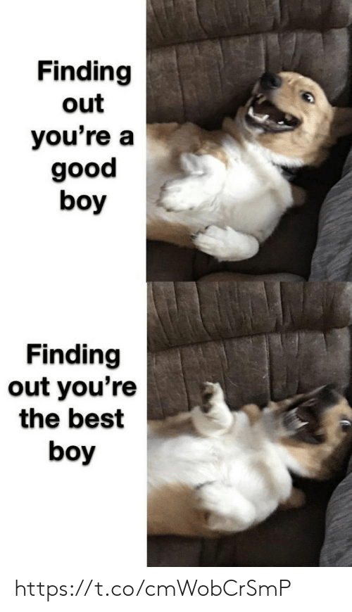 Memes, Best, and Boy: Finding  out  you're a  poo6  boy  Finding  out you're  the best  boy https://t.co/cmWobCrSmP