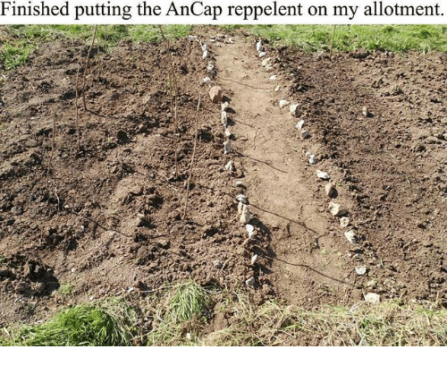 Memes, 🤖, and Allotment: Finished putting the AnCap reppelent on my allotment.