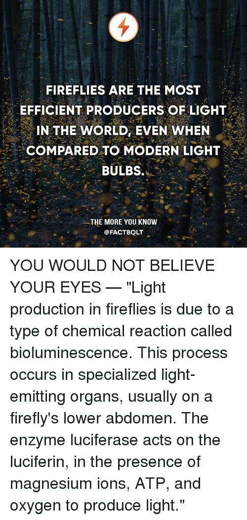 """atp: FIREFLIES ARE THE MOST  EFFICIENT PRODUCERS OF LIGHT  IN THE WORLD, EVEN WHEN  COMPARED TO MODERN LIGHT  BULBS.  .  THE MORE YOU KNOW  @FACTBOLT YOU WOULD NOT BELIEVE YOUR EYES — """"Light production in fireflies is due to a type of chemical reaction called bioluminescence. This process occurs in specialized light-emitting organs, usually on a firefly's lower abdomen. The enzyme luciferase acts on the luciferin, in the presence of magnesium ions, ATP, and oxygen to produce light."""""""
