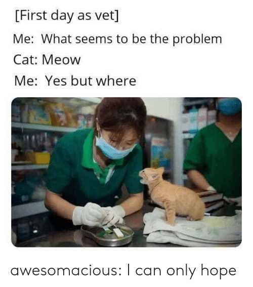 First Day: [First day as vet]  Me: What seems to be the problem  Cat: Meow  Me: Yes but where awesomacious:  I can only hope