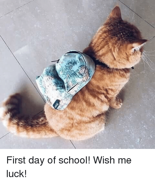 School, Luck, and Day