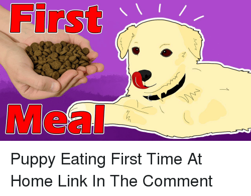 Home, Link, and Puppy: First  Meal