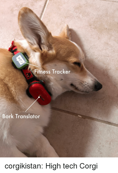 Corgi, Tumblr, and Blog: Fitness Tracker  Bork Translator corgikistan:  High tech Corgi