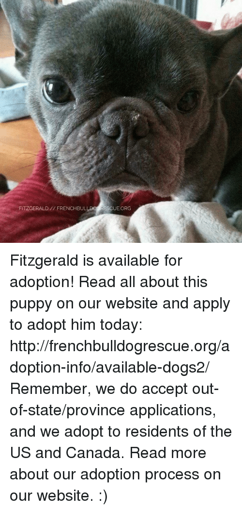 Canadã¡: FITZGERALD FRENCHBULLDO RESCUE ORG Fitzgerald is available for adoption! Read all about this puppy on our website <location, likes, dislikes> and apply to adopt him today: http://frenchbulldogrescue.org/adoption-info/available-dogs2/  Remember, we do accept out-of-state/province applications, and we adopt to residents of the US and Canada. Read more about our adoption process on our website. :)