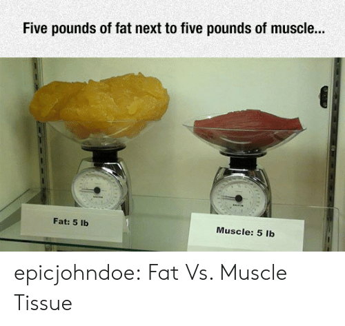 Tumblr, Blog, and Fat: Five pounds of fat next to five pounds of muscle...  Fat: 5 lb  Muscle: 5 lb epicjohndoe:  Fat Vs. Muscle Tissue