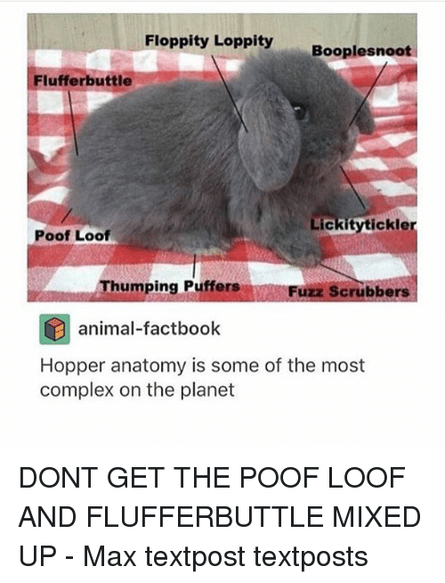 Poofes: Floppity Loppity  Booplesnoot  Fluffer buttle  Lickity tickle  Poof Loof  Thumping Puffers  Fuzz Scrubbers  animal-factbook  Hopper anatomy is some of the most  complex on the planet DONT GET THE POOF LOOF AND FLUFFERBUTTLE MIXED UP - Max textpost textposts