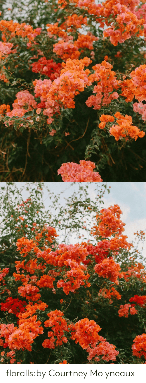 courtney: floralls:by  Courtney Molyneaux