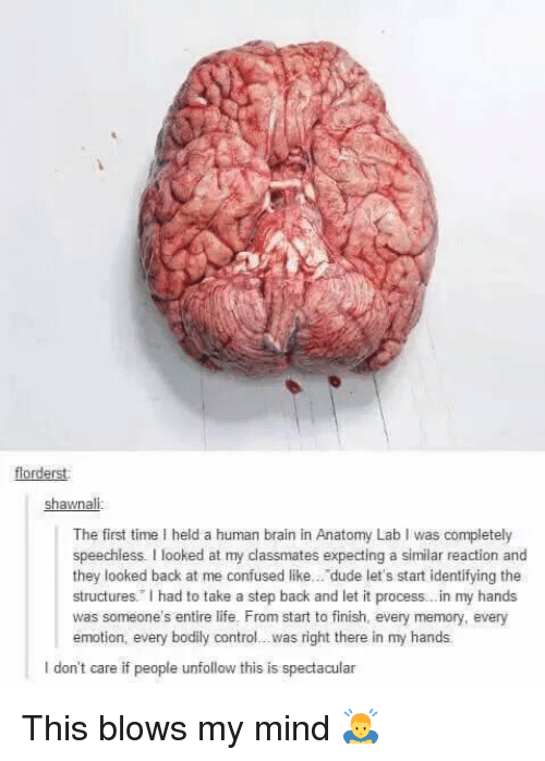 """Look Back At Me: florderst  Shawna  The first time l held a human brain in Anatomy Lab I was completely  speechless. looked at my classmates expecting a similar reaction and  they looked back at me confused like... dude let's start identifying the  structures."""" had to take a step back and let it process...in my hands  was someone's entire life. From start to finish, every memory, every  emotion, every bodily control...was right there in my hands  l don't care if people unfollow this is spectacular This blows my mind 🙇"""