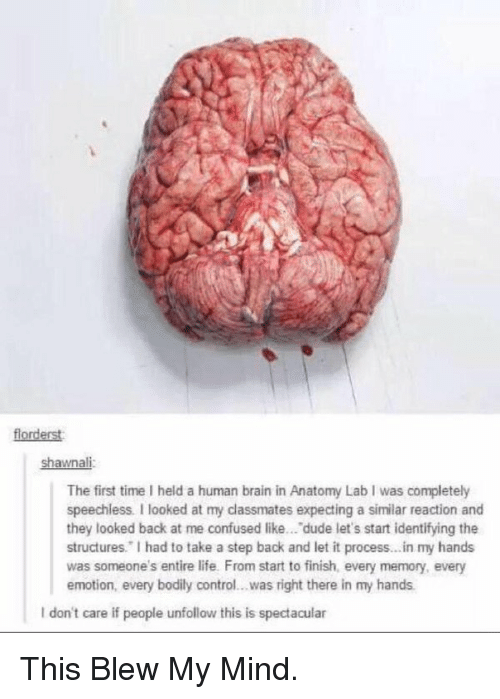 This Blew My Mind: florderst:  shawnali  The first time held a human brain in Anatomy Lab I was completely  speechless. looked at my classmates expecting a similar reaction and  they looked back at me confused like... dude let's start identifying the  structures. had to take a step back and let it process...in my hands  was someone's entire life. From start to finish, every memory, every  emotion, every bodily control...was right there in my hands.  l don't care if people unfollow this is spectacular This Blew My Mind.