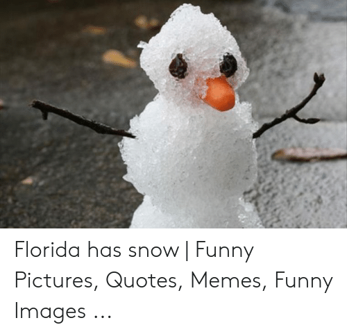 Funny, Memes, and Florida: Florida has snow | Funny Pictures, Quotes, Memes, Funny Images ...