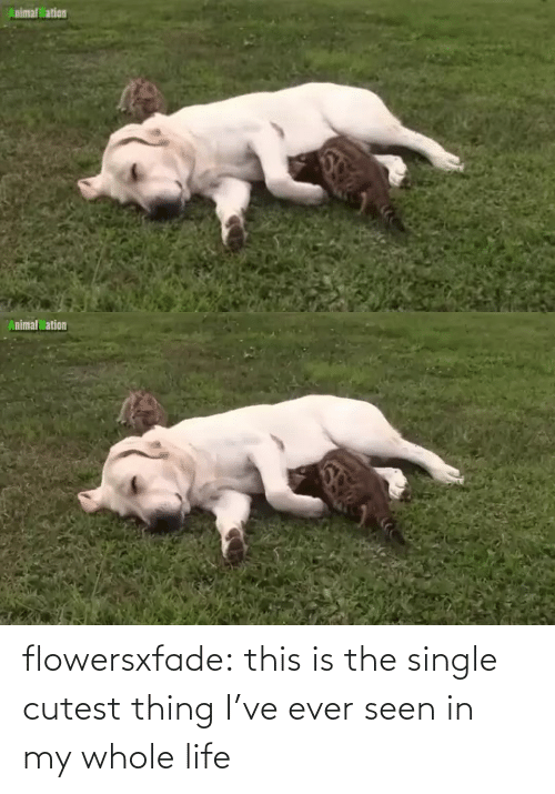 Http: flowersxfade: this is the single cutest thing I've ever seen in my whole life