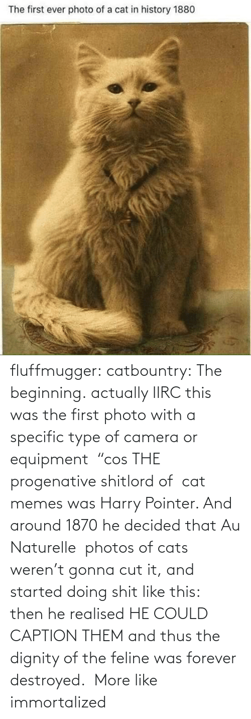 "The First: fluffmugger:  catbountry: The beginning. actually IIRC this was the first photo with a specific type of camera or equipment  ""cos THE progenative shitlord of  cat memes was Harry Pointer. And around 1870 he decided that Au Naturelle  photos of cats weren't gonna cut it, and started doing shit like this:  then he realised HE COULD CAPTION THEM and thus the dignity of the feline was forever destroyed.     More like immortalized"