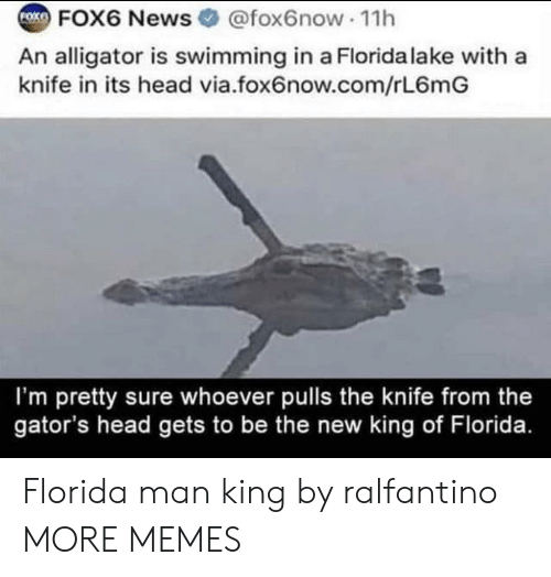 King Of: FOK  FOX6 News @fox6now 11h  An alligator is swimming in a Florida lake with a  knife in its head via.fox6now.com/rL6mG  I'm pretty sure whoever pulls the knife from the  gator's head gets to be the new king of Florida. Florida man king by ralfantino MORE MEMES