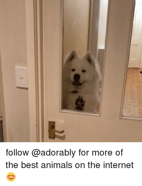 Animals, Internet, and Best: follow @adorably for more of the best animals on the internet 😊