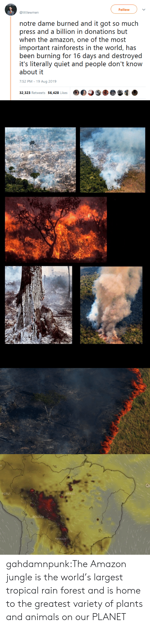 brasil: Follow  @littlewmen  notre dame burned and it got so much  press and a billion in donations but  when the amazon, one of the most  important rainforests in the world, has  been burning for 16 days and destroyed  it's literally quiet and people don't know  about it  7:52 PM - 19 Aug 2019  32,323 Retweets 56,428 Likes   Q  PERU  BRASIL  BOLIVIA  PARAGUAN gahdamnpunk:The Amazon jungle is the world's largest tropical rain forest and is home to the greatest variety of plants and animals on our PLANET