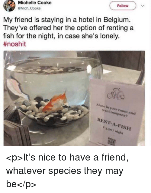 Cooke: Follow  Michelle Cooke  @Mich Cooke  My friend is staying in a hotel in Belgium.  They've offered her the option of renting a  fish for the night, in case she's lonely.  #noshit  Alone in your room and  want company?  RENT-A-FISH <p>It's nice to have a friend, whatever species they may be</p>
