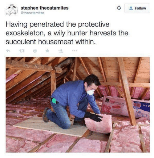 Stephen, Pink, and Hunter: Follow  stephen thecatamites  @thecatamites  Having penetrated the protective  exoskeleton, a wily hunter harvests the  succulent housemeat within.  PINK  2x6 W  R-