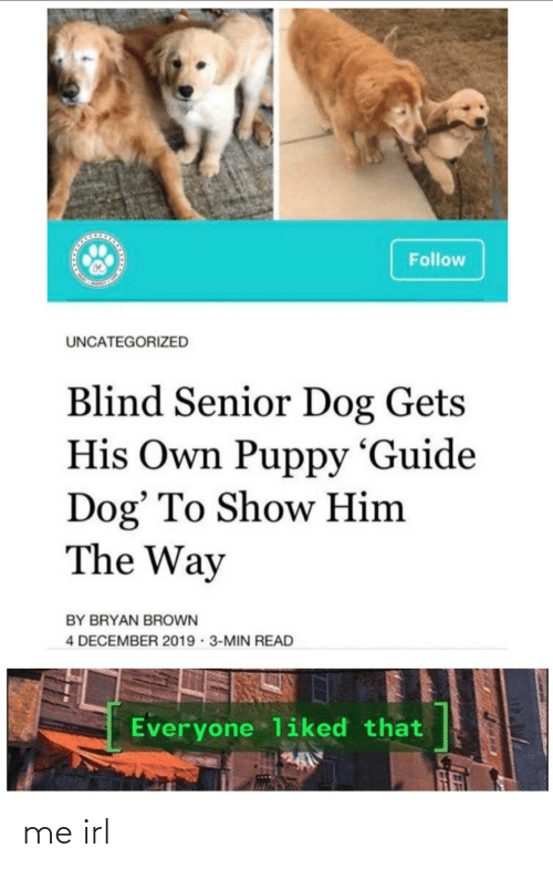 guide: Follow  UNCATEGORIZED  Blind Senior Dog Gets  His Own Puppy 'Guide  Dog' To Show Him  The Way  BY BRYAN BROWN  4 DECEMBER 2019 · 3-MIN READ  Everyone liked that me irl
