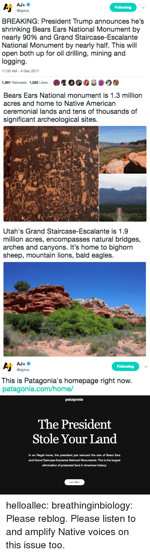 patagonia: Following  @ajplus  BREAKING: President Trump announces he's  shrinking Bears Ears National Monument by  nearly 90% and Grand Staircase-Escalante  National Monument by nearly half. This will  open both up for oil drilling, mining and  logging  11:35 AM-4 Dec 2017  1,891 Retweets 1,025 Likes   Bears Ears National monument is 1.3 million  acres and home to Native American  ceremonial lands and tens of thousands of  significant archeological sites.  sh   Utah's Grand Staircase-Escalante is 1.9  million acres, encompasses natural bridges,  arches and canyons. It's home to bighorn  sheep, mountain lions, bald eagles   Following  @ajplus  This is Patagonia's homepage right now  patagonia.com/home/   patagonia  The President  Stole Your Land  In an illegal move, the president just reduced the size of Bears Ears  and Grand Staircase-Escalante National Monuments. This is the largest  elimination of protected land in American history.  Learn More helloallec: breathinginbiology: Please reblog.  Please listen to and amplify Native voices on this issue too.