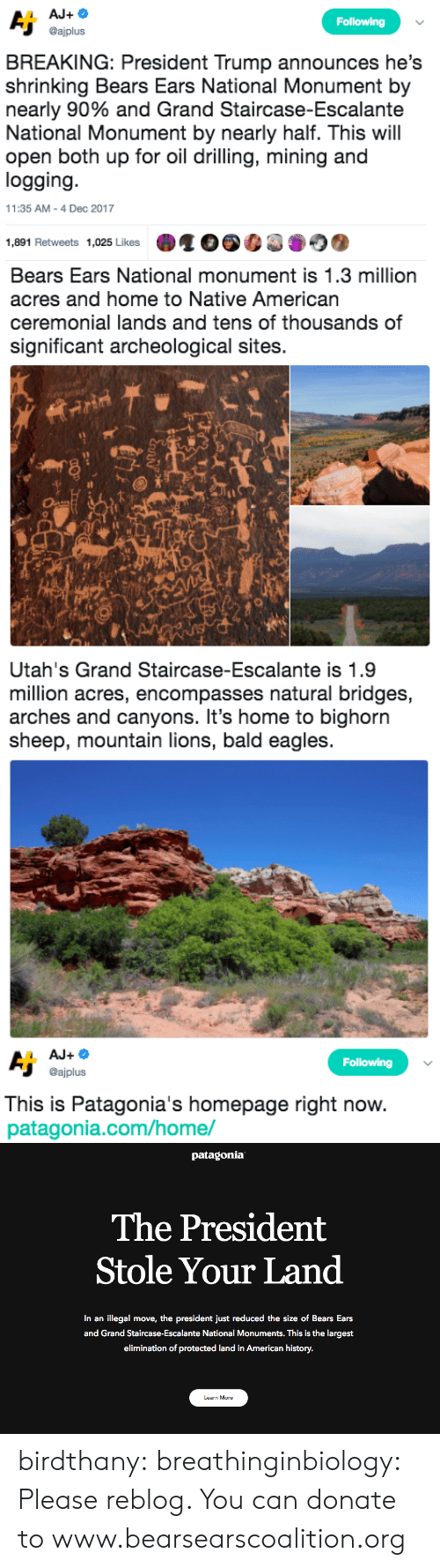 patagonia: Following  @ajplus  BREAKING: President Trump announces he's  shrinking Bears Ears National Monument by  nearly 90% and Grand Staircase-Escalante  National Monument by nearly half. This will  open both up for oil drilling, mining and  logging  11:35 AM-4 Dec 2017  1,891 Retweets 1,025 Likes   Bears Ears National monument is 1.3 million  acres and home to Native American  ceremonial lands and tens of thousands of  significant archeological sites.  sh   Utah's Grand Staircase-Escalante is 1.9  million acres, encompasses natural bridges,  arches and canyons. It's home to bighorn  sheep, mountain lions, bald eagles   Following  @ajplus  This is Patagonia's homepage right now  patagonia.com/home/   patagonia  The President  Stole Your Land  In an illegal move, the president just reduced the size of Bears Ears  and Grand Staircase-Escalante National Monuments. This is the largest  elimination of protected land in American history.  Learn More birdthany: breathinginbiology: Please reblog.  You can donate to www.bearsearscoalition.org