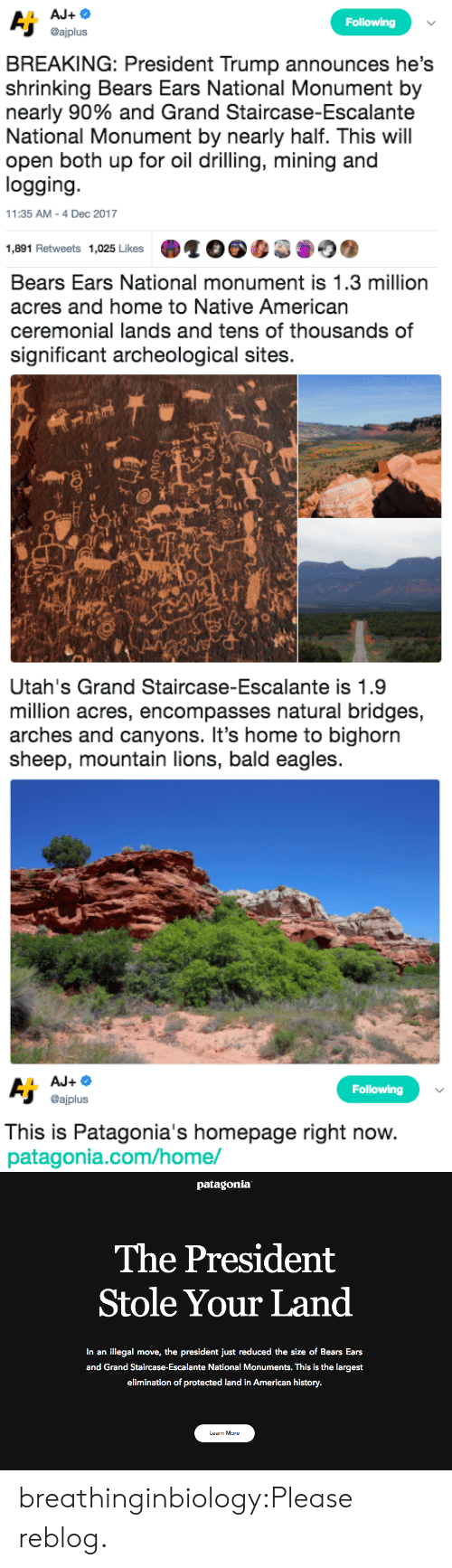 patagonia: Following  @ajplus  BREAKING: President Trump announces he's  shrinking Bears Ears National Monument by  nearly 90% and Grand Staircase-Escalante  National Monument by nearly half. This will  open both up for oil drilling, mining and  logging  11:35 AM-4 Dec 2017  1,891 Retweets 1,025 Likes   Bears Ears National monument is 1.3 million  acres and home to Native American  ceremonial lands and tens of thousands of  significant archeological sites.  sh   Utah's Grand Staircase-Escalante is 1.9  million acres, encompasses natural bridges,  arches and canyons. It's home to bighorn  sheep, mountain lions, bald eagles   Following  @ajplus  This is Patagonia's homepage right now  patagonia.com/home/   patagonia  The President  Stole Your Land  In an illegal move, the president just reduced the size of Bears Ears  and Grand Staircase-Escalante National Monuments. This is the largest  elimination of protected land in American history.  Learn More breathinginbiology:Please reblog.