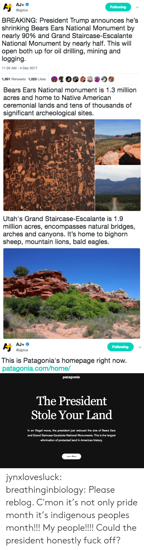 Philadelphia Eagles, Native American, and Tumblr: Following  @ajplus  BREAKING: President Trump announces he's  shrinking Bears Ears National Monument by  nearly 90% and Grand Staircase-Escalante  National Monument by nearly half. This will  open both up for oil drilling, mining and  logging  11:35 AM-4 Dec 2017  1,891 Retweets 1,025 Likes   Bears Ears National monument is 1.3 million  acres and home to Native American  ceremonial lands and tens of thousands of  significant archeological sites.  sh   Utah's Grand Staircase-Escalante is 1.9  million acres, encompasses natural bridges,  arches and canyons. It's home to bighorn  sheep, mountain lions, bald eagles   Following  @ajplus  This is Patagonia's homepage right now  patagonia.com/home/   patagonia  The President  Stole Your Land  In an illegal move, the president just reduced the size of Bears Ears  and Grand Staircase-Escalante National Monuments. This is the largest  elimination of protected land in American history.  Learn More jynxlovesluck:  breathinginbiology: Please reblog.   C'mon it's not only pride month it's indigenous peoples month!!! My people!!!! Could the president honestly fuck off?