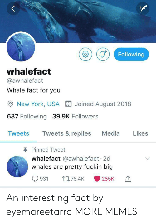 Dank, Memes, and New York: +  Following  whalefact  @awhalefact  Whale fact for you  Joined August 2018  New York, USA  637 Following 39.9K Followers  Likes  Tweets & replies  Media  Tweets  Pinned Tweet  whalefact @awhalefact 2d  whales are pretty fuckin big  L76.4K  931  285K An interesting fact by eyemareetarrd MORE MEMES