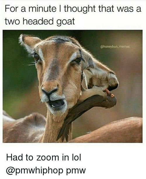 zoom ins: For a minute l thought that was a  two headed goat  @honey bun memes Had to zoom in lol @pmwhiphop pmw