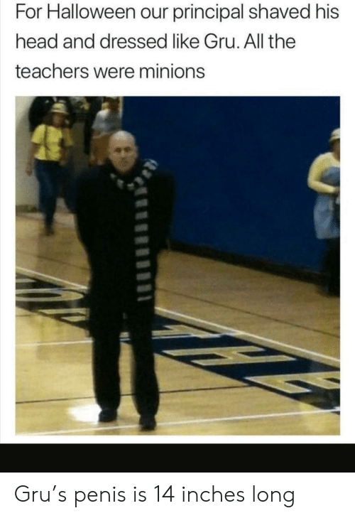 Minions: For Halloween our principal shaved his  head and dressed like Gru. All the  teachers were minions Gru's penis is 14 inches long