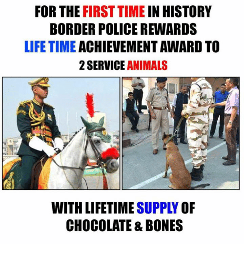 lifetime achievement award: FOR THE  FIRST TIME  IN HISTORY  BORDER POLICE REWARDS  LIFETIME  ACHIEVEMENT AWARD TO  2 SERVICE  ANIMALS  WITH LIFETIME  OF  CHOCOLATE & BONES