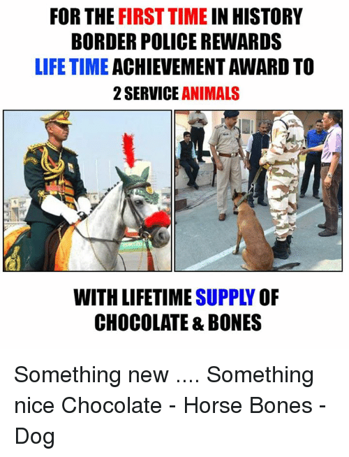 lifetime achievement award: FOR THE FIRST TIME IN HISTORY  BORDER POLICE REWARDS  LIFETIME  ACHIEVEMENT AWARD TO  2 SERVICE  ANIMALS  WITH LIFETIME  OF  CHOCOLATE & BONES Something new .... Something nice  Chocolate - Horse Bones - Dog