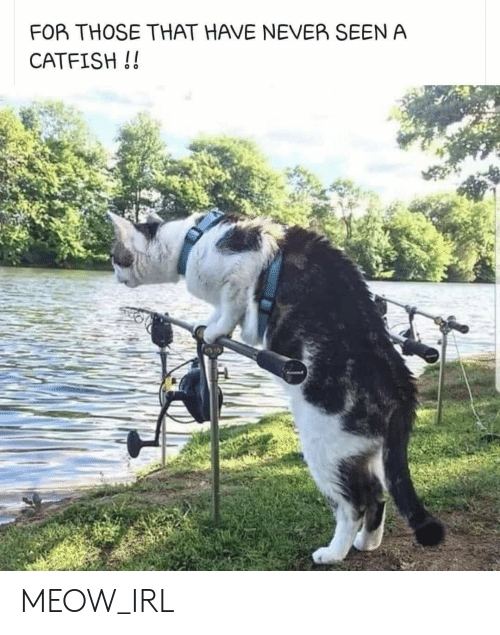A Catfish: FOR THOSE THAT HAVE NEVER SEEN A  CATFISH!! MEOW_IRL