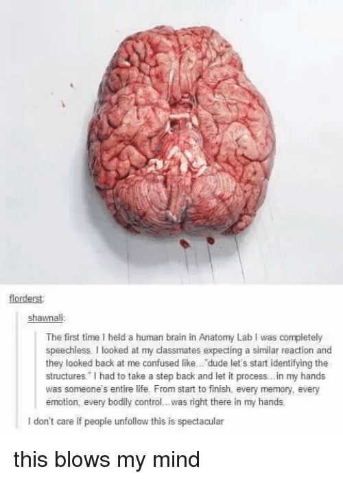 """Look Back At Me: forderst  shawnali  The first time l held a human brain in Anatomy Lab I was completely  speechless. looked at my classmates expecting a similar reaction and  they looked back at me confused like... dude let's start identifying the  structures."""" had to take a step back and let it process...in my hands  was someone's entire life. From start to finish, every memory, every  emotion, every bodily control...was right there in my hands  l don't care if people unfollow this is spectacular this blows my mind"""