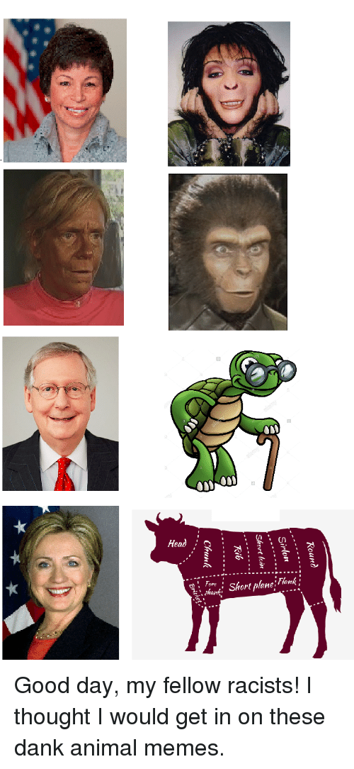 Dank, Memes, and Animal: Fore  Short planeHank' Good day, my fellow racists! I thought I would get in on these dank animal memes.