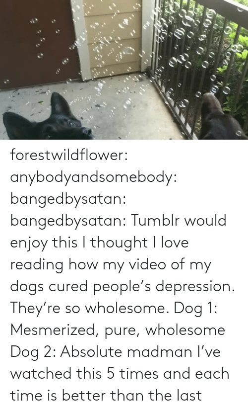 reading: forestwildflower: anybodyandsomebody:   bangedbysatan:  bangedbysatan:  Tumblr would enjoy this I thought  I love reading how my video of my dogs cured people's depression. They're so wholesome.   Dog 1: Mesmerized, pure, wholesome Dog 2: Absolute madman   I've watched this 5 times and each time is better than the last