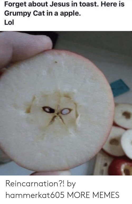 Apple, Dank, and Jesus: Forget about Jesus in toast. Here is  Grumpy Cat in a apple.  Lol Reincarnation?! by hammerkat605 MORE MEMES