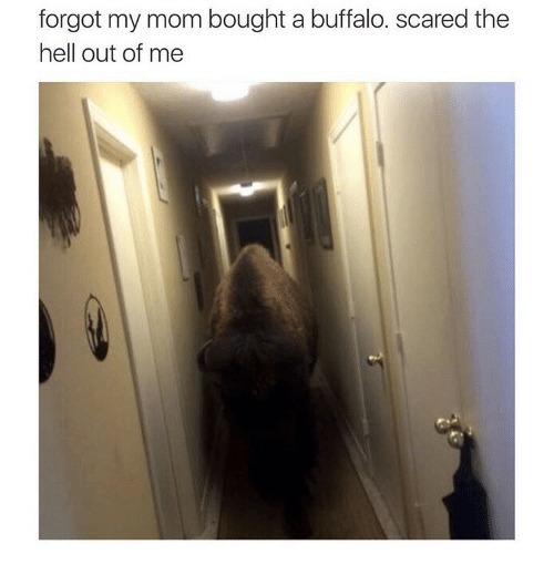 Buffalo, Hell, and Mom: forgot my mom bought a buffalo. scared the  hell out of me