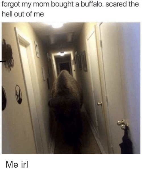 Buffalo, Hell, and Irl: forgot my mom bought a buffalo. scared the  hell out of me Me irl