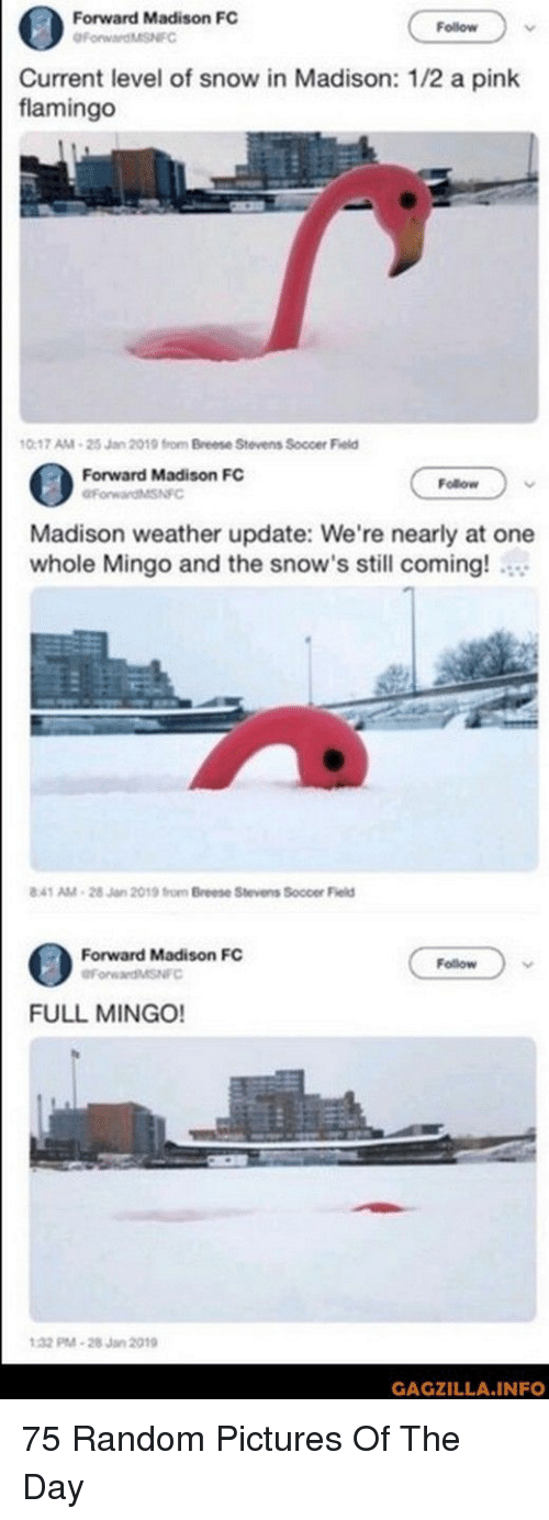 Soccer, Pictures, and Pink: Forward Madison FC  Follow  urrent level of snow in Madison: 1/2 a pink  flamingo  0-17 AM-25 Jan 2019 from Breese Stevens Soccer Field  Forward Madison FC  Follow  Madison weather update: We're nearly at one  whole Mingo and the snow's still coming!  41 AM-28 Jan 2019 from Breese Stevens Soccer Field  Forward Madison FC  Follow  FULL MINGO!  32 M-28Jan 2019  GAGZILLA.INFO 75 Random Pictures Of The Day