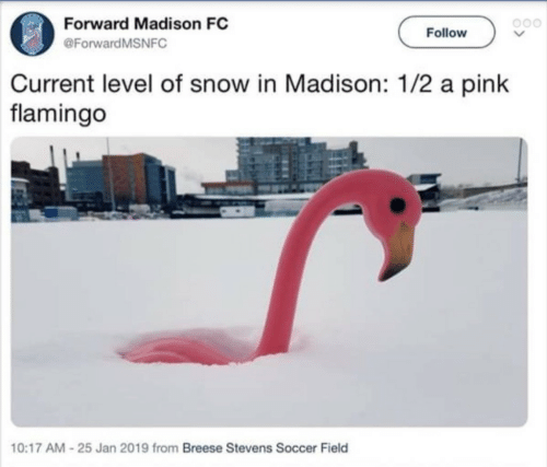 Soccer, Pink, and Snow: Forward Madison FC  @ForwardMSNFC  Follow  Current level of snow in Madison: 1/2 a pink  flamingo  10:17 AM-25 Jan 2019 from Breese Stevens Soccer Field