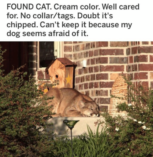 Dank, Doubt, and 🤖: FOUND CAT. Cream color. Well cared  for. No collar/tags. Doubt it's  chipped. Can't keep it because my  dog seems afraid of it.