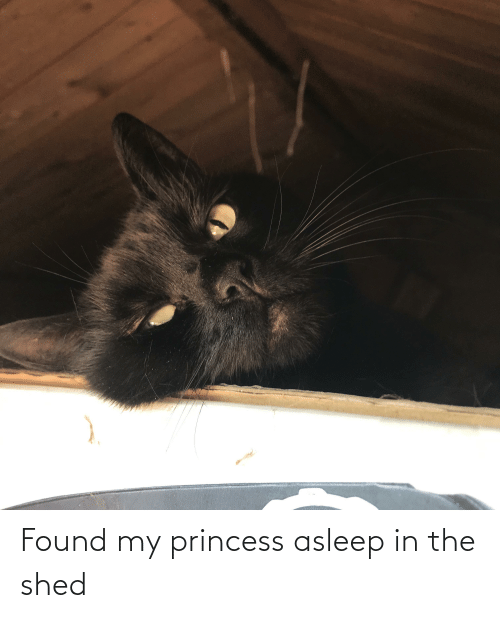 shed: Found my princess asleep in the shed