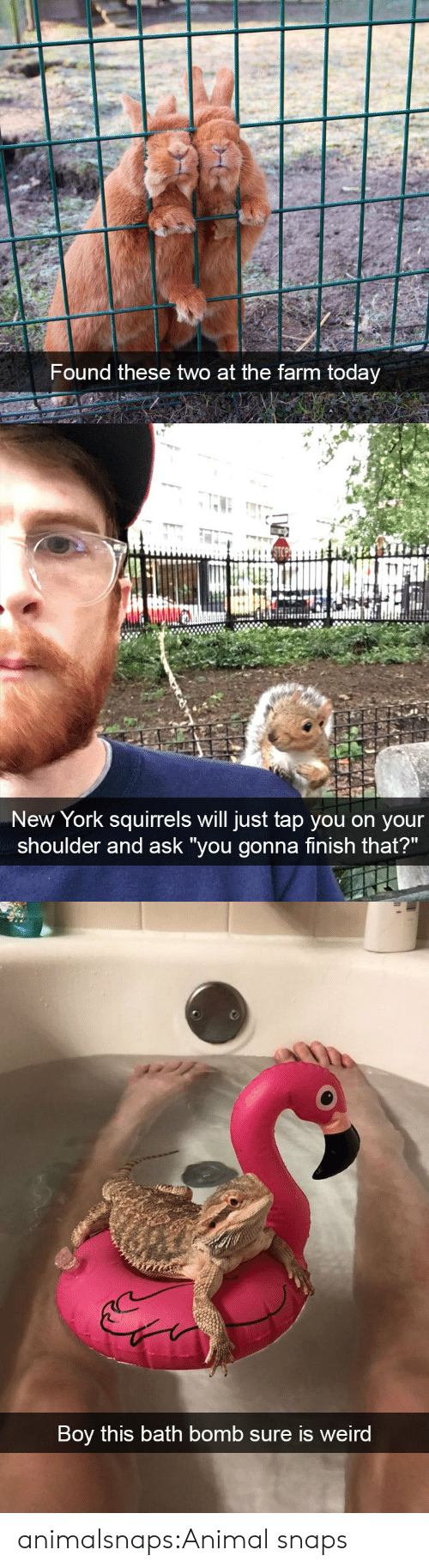 "New York, Target, and Tumblr: Found these two at the farm today   New York squirrels will just tap you on your  shoulder and ask ""you gonna finish that?""   Boy this bath bomb sure is weird animalsnaps:Animal snaps"