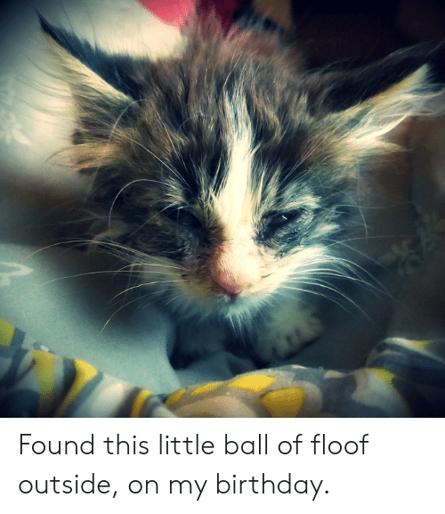 Birthday, Ball, and This: Found this little ball of floof outside, on my birthday.