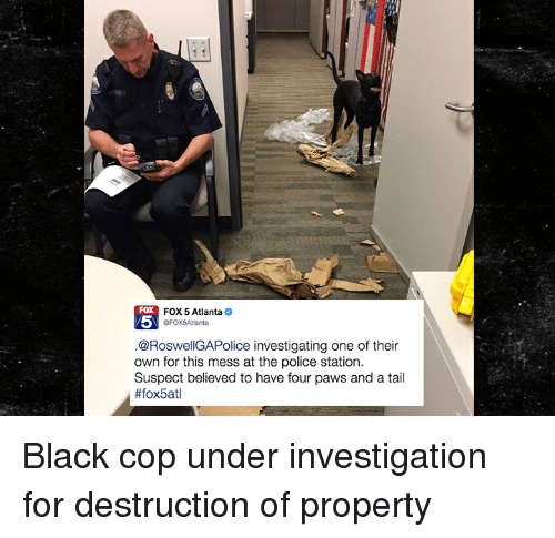 Funny, Police, and Black: FOX 5 Atlanta  GFOX5Atlanta  FOX  5  @RoswellGAPolice investigating one of their  own for this mess at the police station  Suspect believed to have four paws and a tail  Black cop under investigation for destruction of property