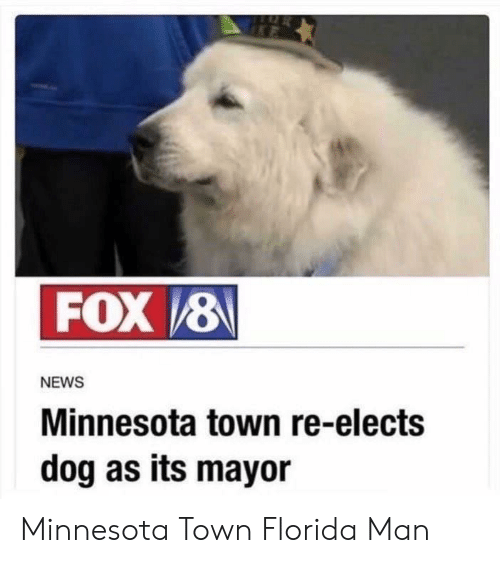 Minnesota: FOX 8  NEWS  Minnesota town re-elects  dog as its mayor Minnesota Town  Florida Man